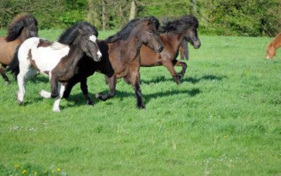 Nos chevaux à l'honneur