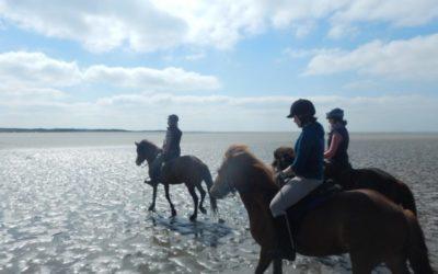Baie de Somme – Adulte